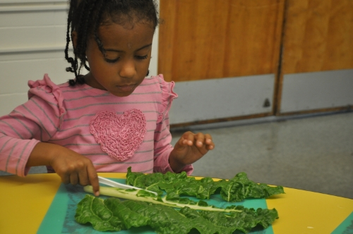 A student prepares swiss chard in the food lab at School Within School.