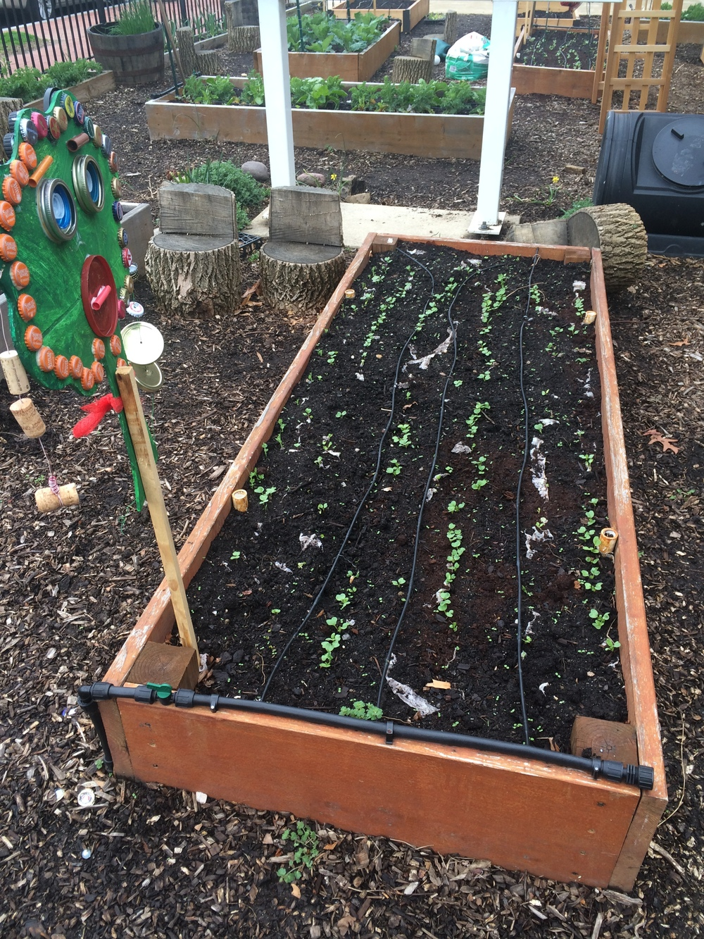 Look at our garden grow in perfectly spaced rows!