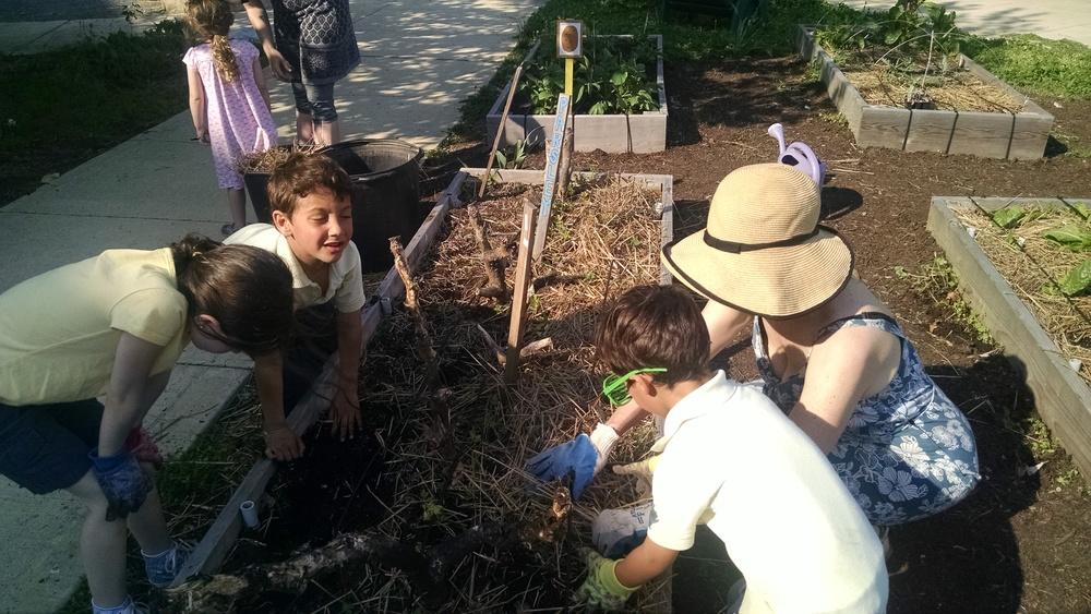 After school garden helpers.