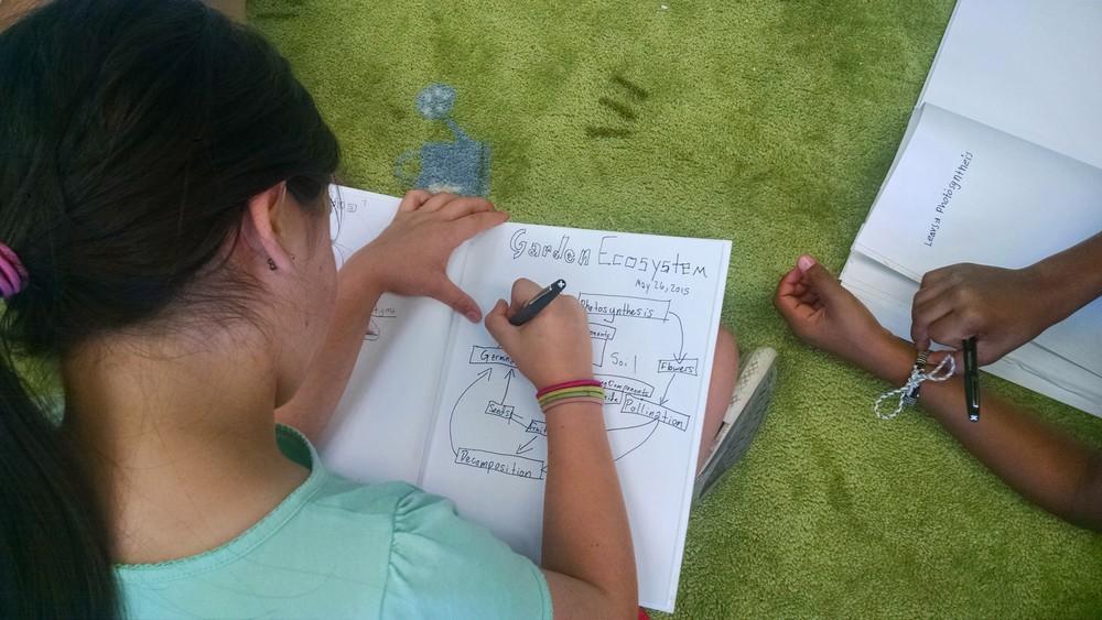 A 4th Grade FoodPrints student illustrates the garden ecosystem.