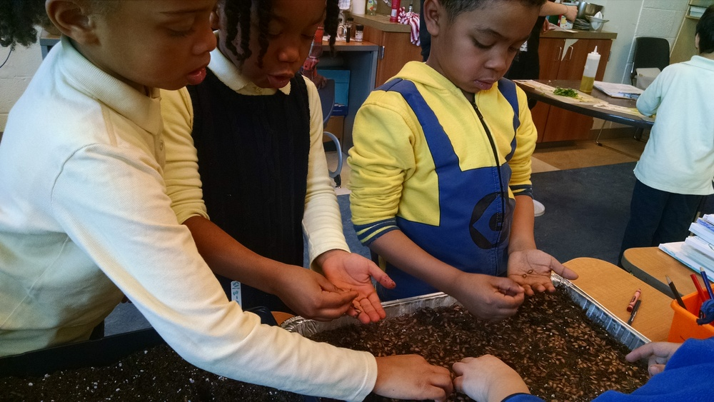 Starting seeds with Ms. Willis' First Graders in March.