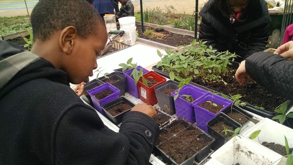 Transplanting during recess.