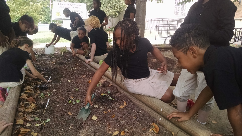 Students plant seedlings at our newest school garden, School Without Walls at Francis Stevens.
