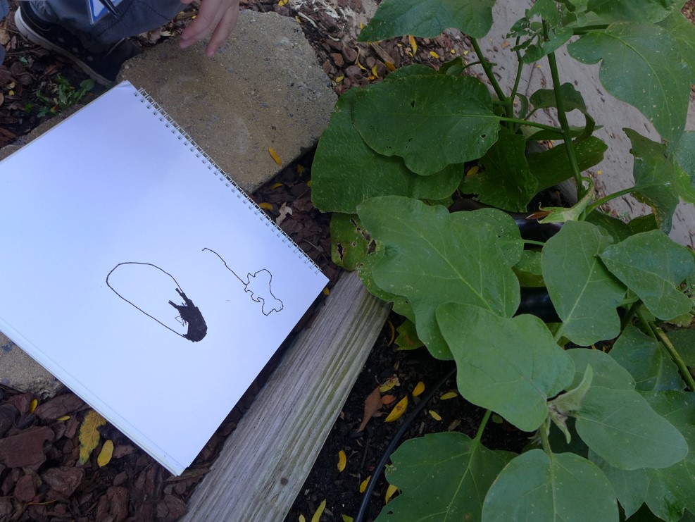 Observational drawing of an eggplant.