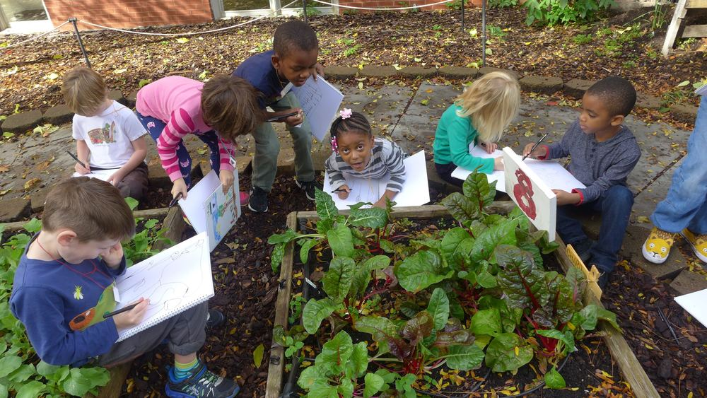 Children make observational drawings of chard they grew in their school garden.