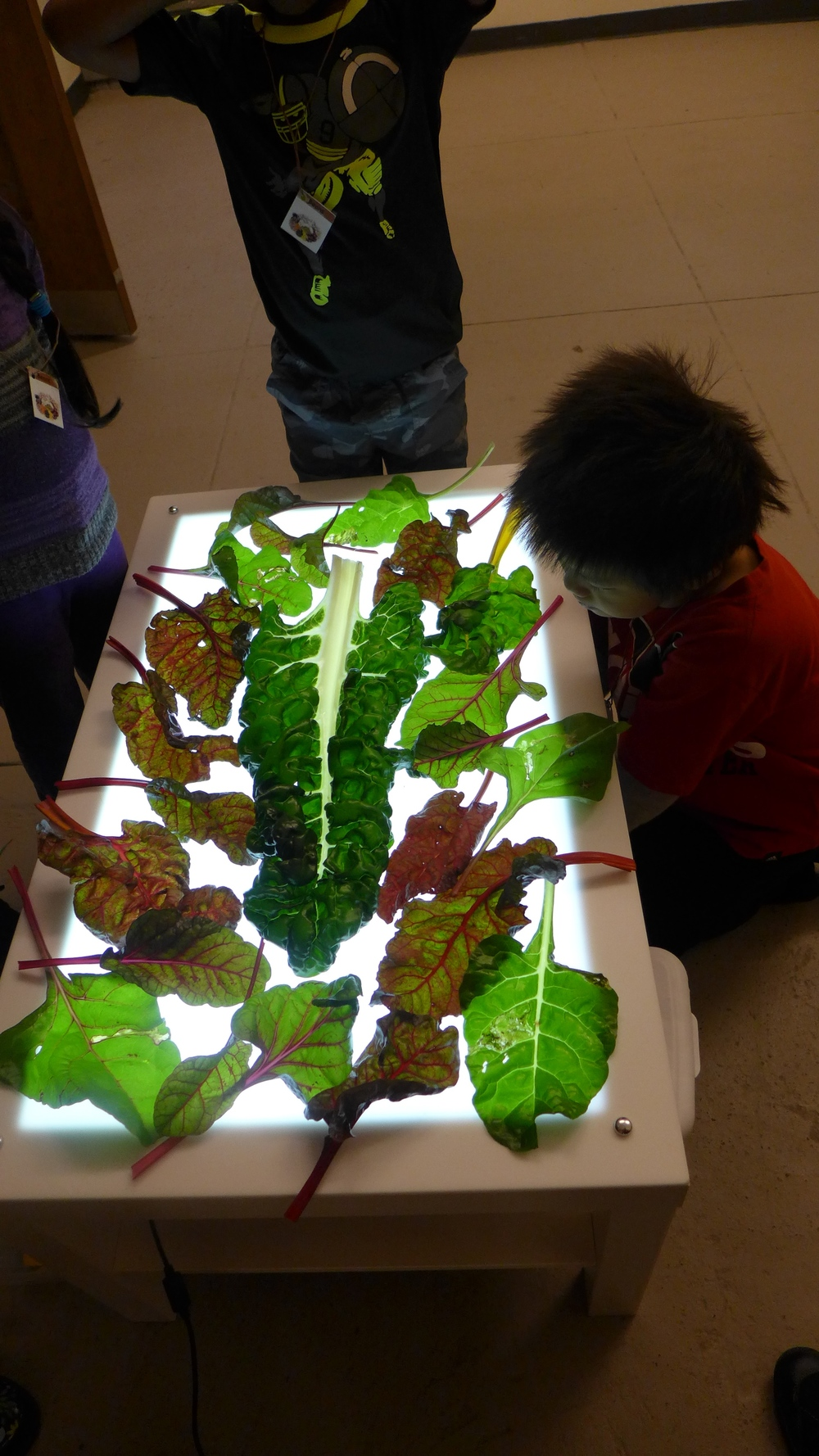 A lightbox is a perfect way to get a close look at the plants we eat.