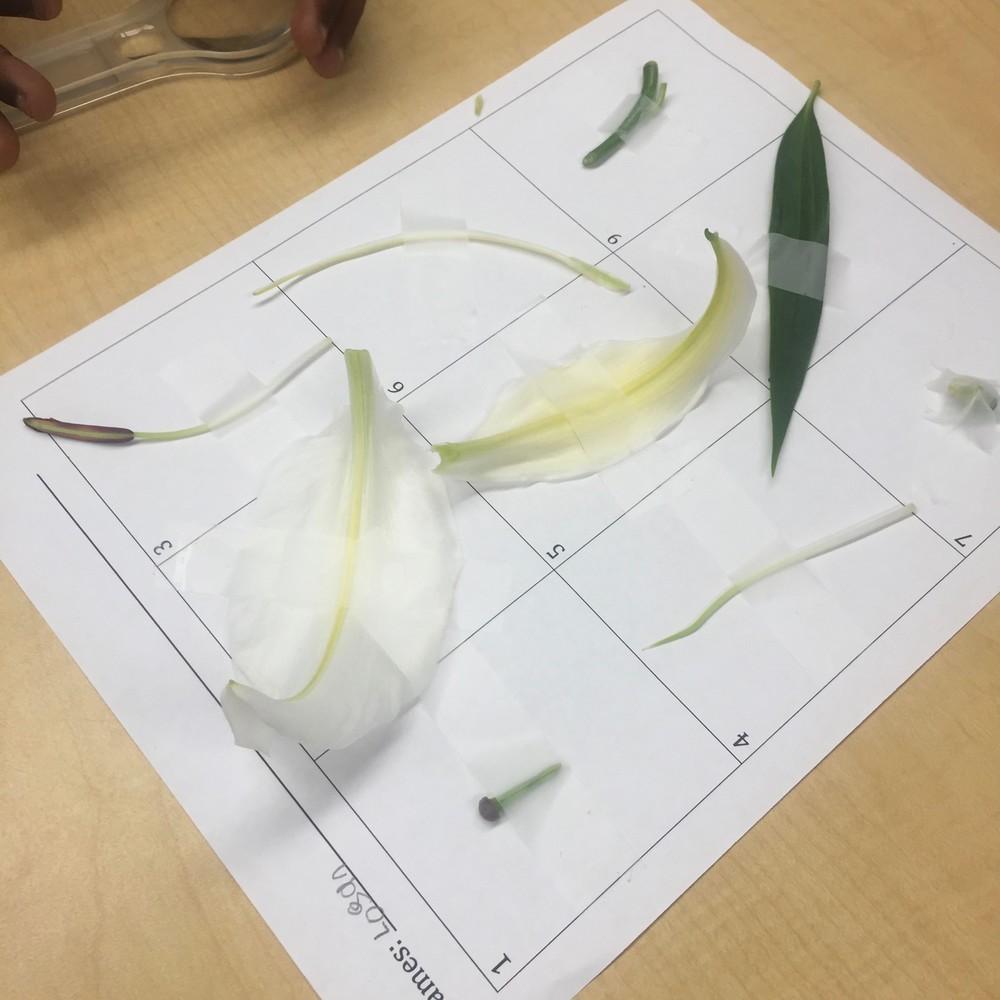 Plant parts lesson