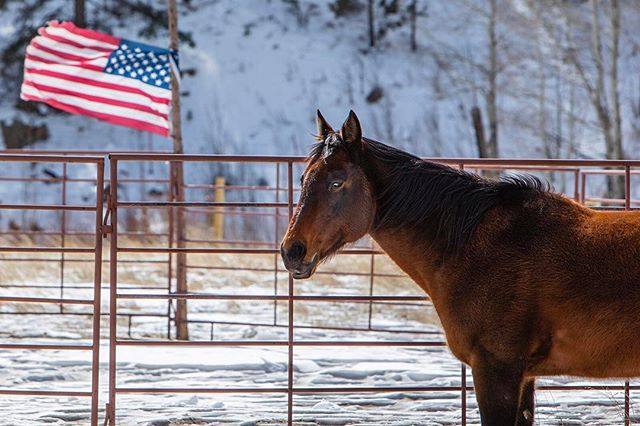 """All you need for happiness is a good gun, a good horse, and a good wife."" Daniel Boone. • • • • • #Colorado #Landscape #LandscapePhotography #Horse #America #Flag #Explore #Travel #Range #Wild #Beauty #Nature #Cowboy #Winter #Canon"