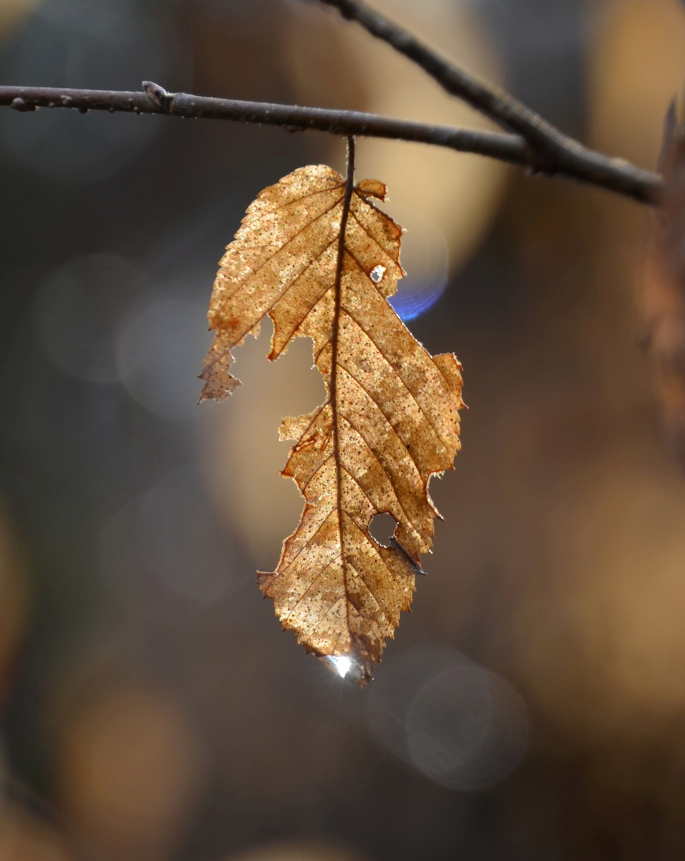 Georgia_Elijay_Sunkissed Leaf_2012.JPG