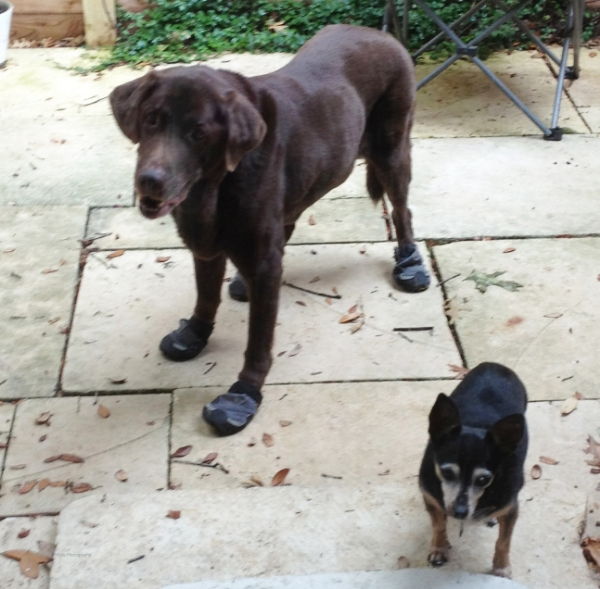 In loving memory of my old guys, Rusty and Oscar. X