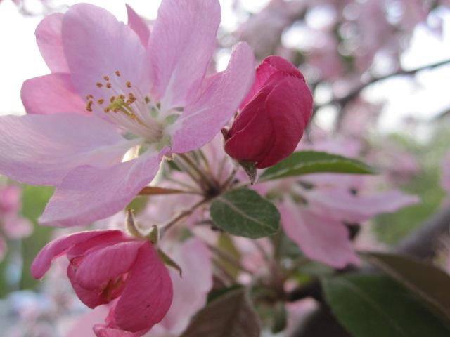 Spring Elixir