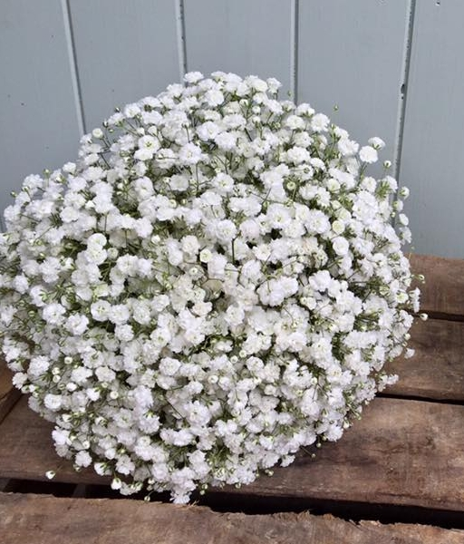 White Gypsophila Bouquet.jpg