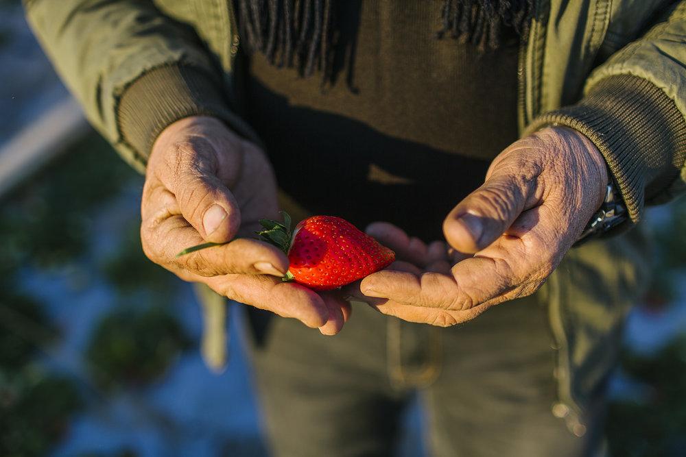 USAID-Israel-Day5-Strawberries-TD4A7718.jpg
