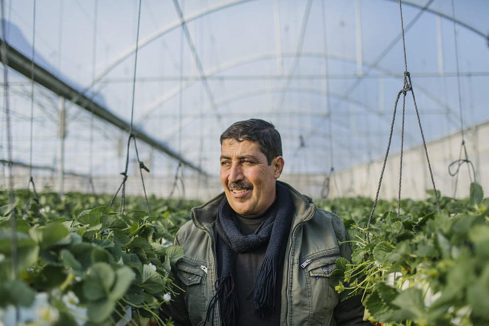 USAID-Israel-Day5-Strawberries-TD4A8119.jpg