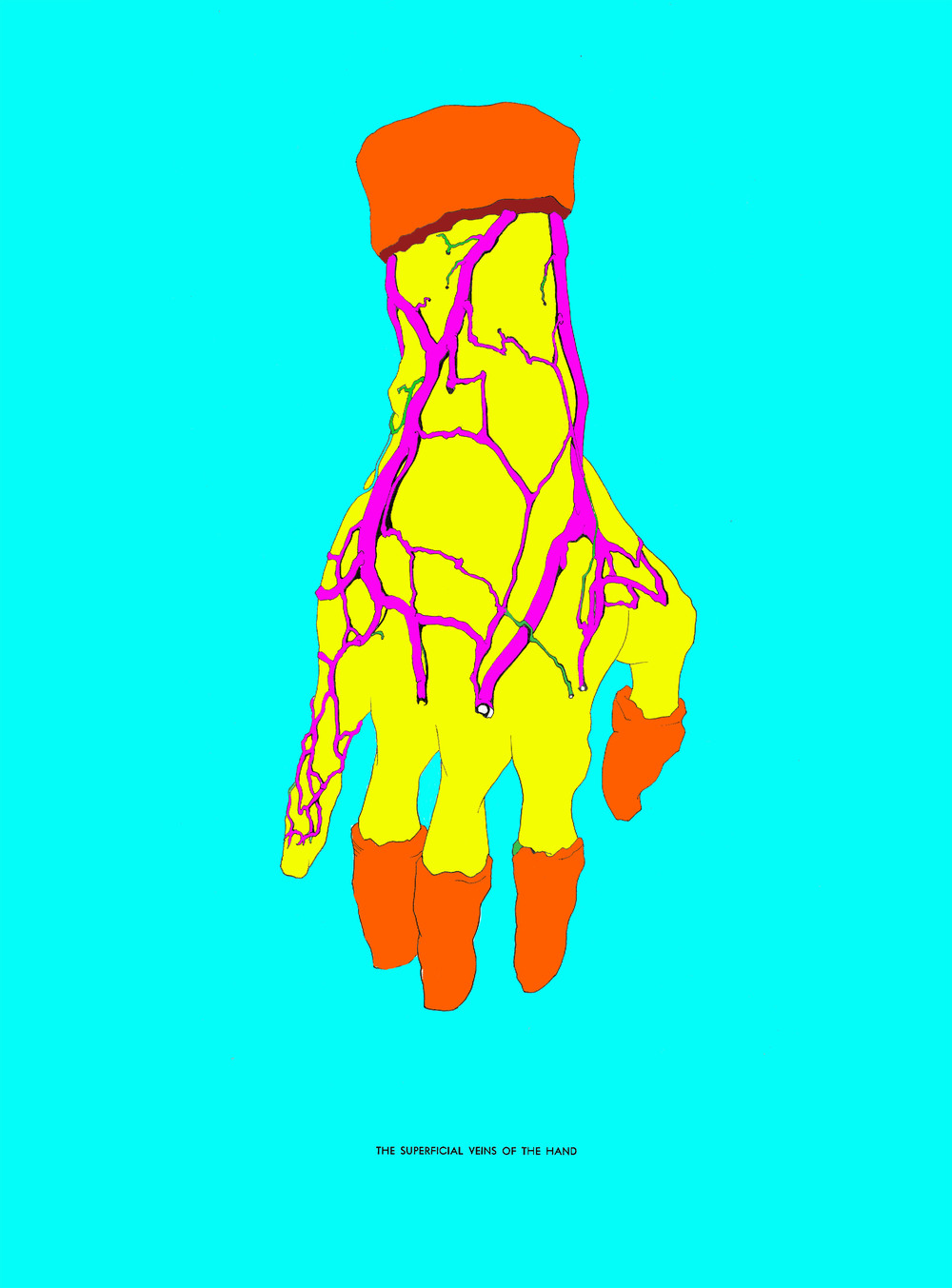 "Superficial Veins of the Hand (Now in Technicolor)   Pen and Ink, digital coloring   13""x 20"""