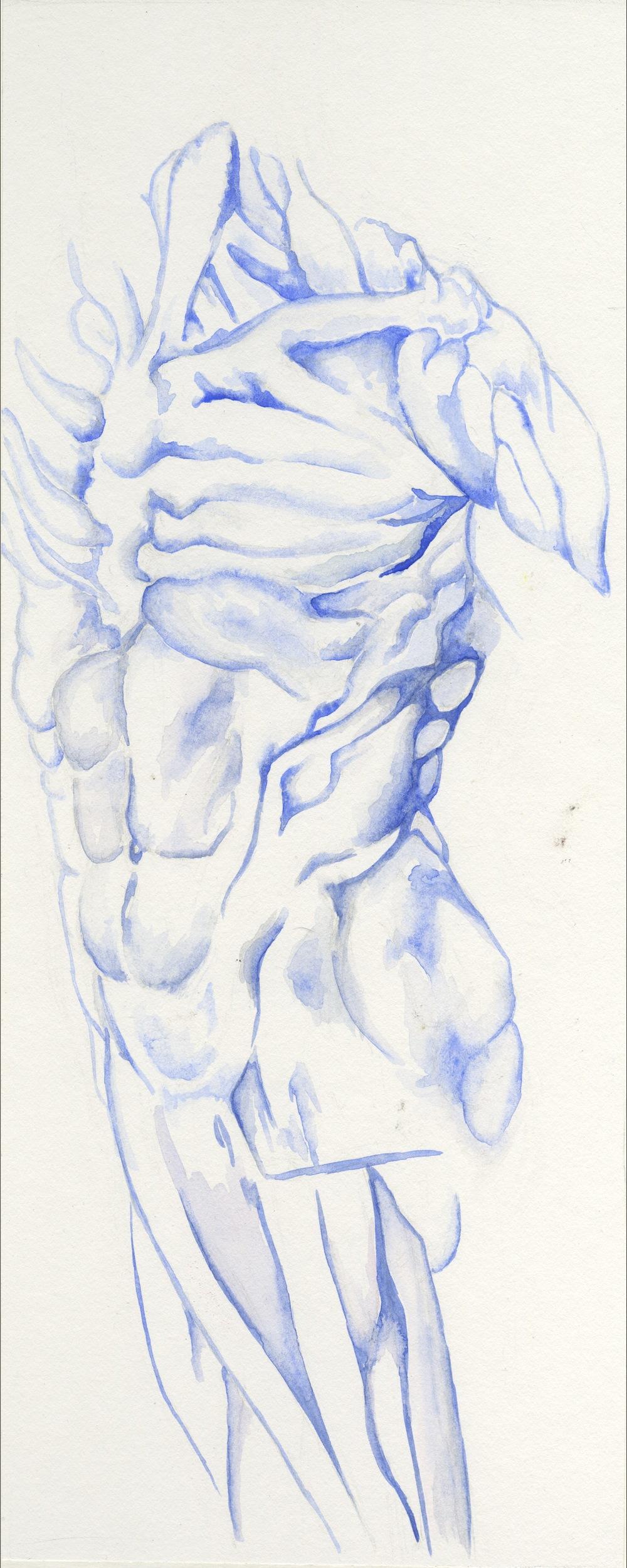 torso.jpeg