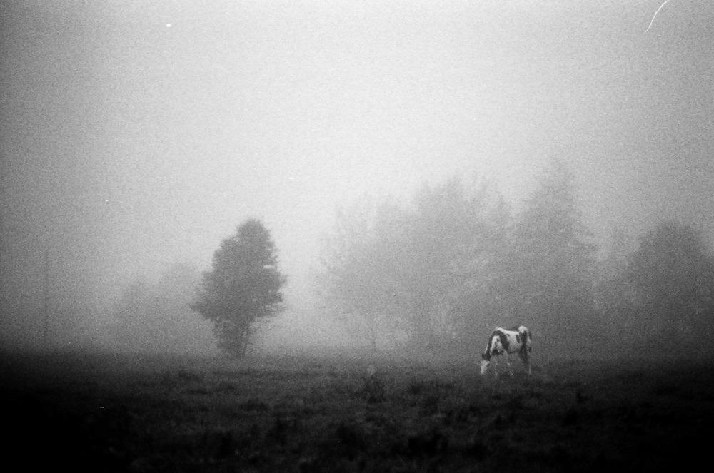 morning mist. cayuga, ontario. #kodak #t-max #400