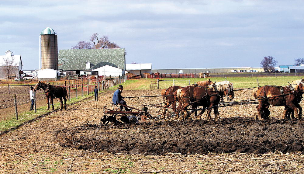 Spring plowing with Belgian draft horses makes the plain and simple life of peace, hard work and love of the soil, a scene of tranquility at an Amish farm near Arthur. Bill Hagen/The State Journal-Register