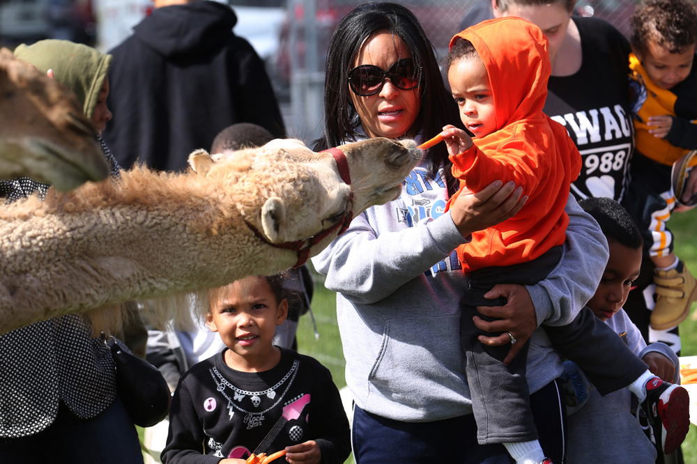 Tyssen Reeves, 1 of Collinsville, held by mom Camille Reeves, gently feeds a carrot stick to a camel that was part of a petting zoo set up on the grounds of the club on Saturday. The first Bridging the Gap BBQ was held at the Boys & Girls Club of Springfield on Saturday, Oct. 4, 2014. The event brought together community organizations as well as police and first responders. David Spencer/The State Journal-Register
