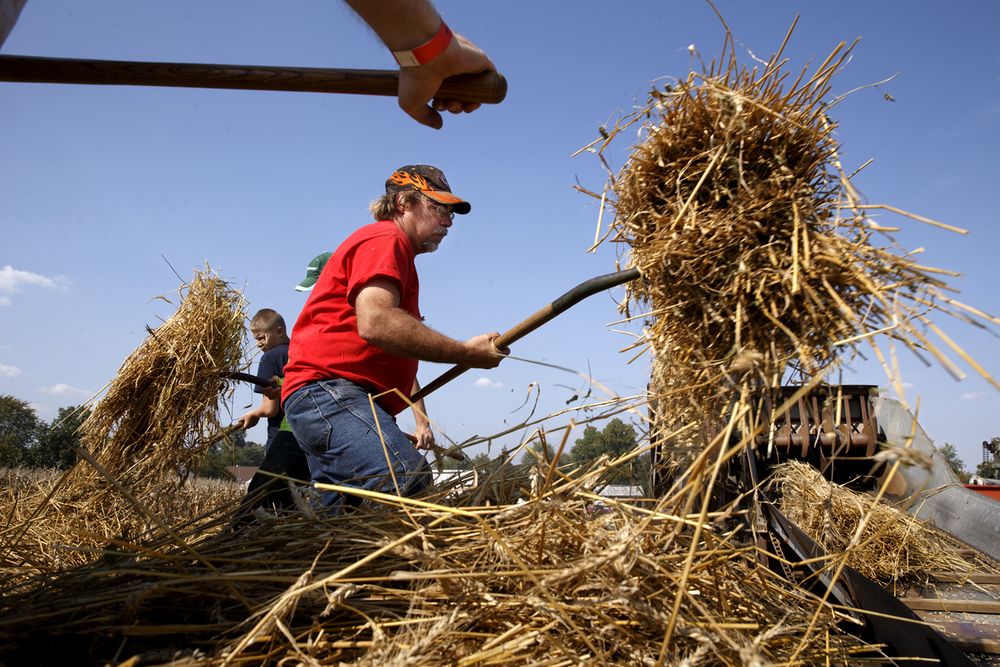 Donnie DeLong throws a pitchfork of wheat into a threshing machine powered by a steam engine during the 45th Annual Steam Show and Fall Festival Days at the Prairieland Heritage Museum Friday, Sept. 26, 2014. The festival features steam-powered train rides, an antique tractor pull, flea market and more and continues through Sunday. Children under 12 are admitted free.  Ted Schurter/The State Journal-Register