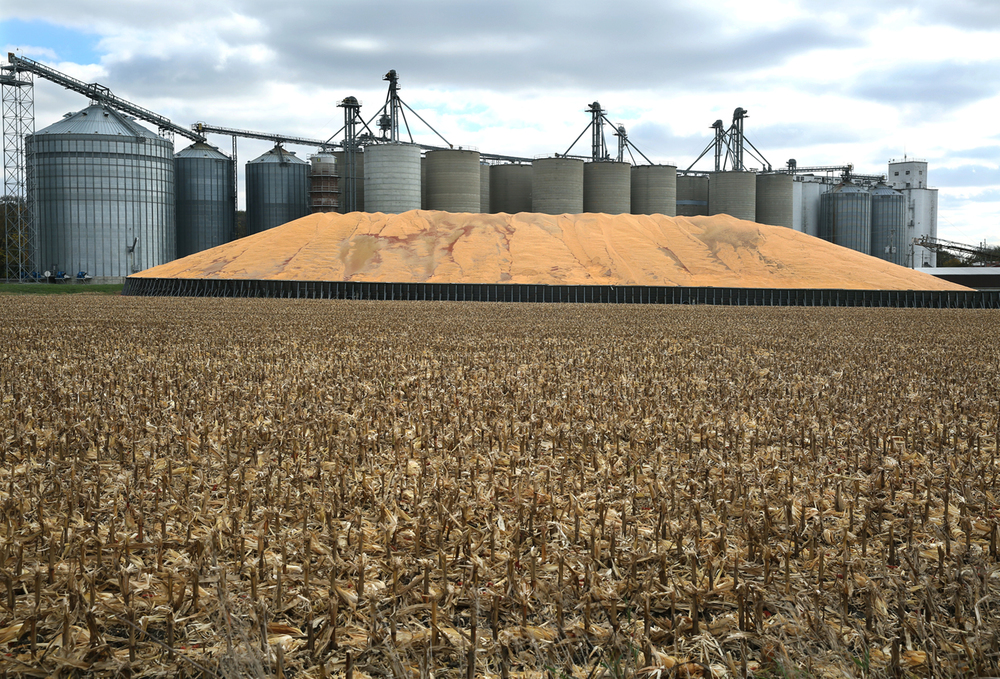 A large pile of corn, overflow from the Elkhart Grain Company silos seen in background, could be seen from the northbound lanes of Interstate 55 in Elkhart on Wednesday, Oct. 29, 2014. According to state Department of Agriculture figures provided by the Illinois Corn Growers Association, permit applications have been submitted for temporary storage of 107.4 million bushels of grain as of Oct. 21. David Spencer/The State Journal-Registe r