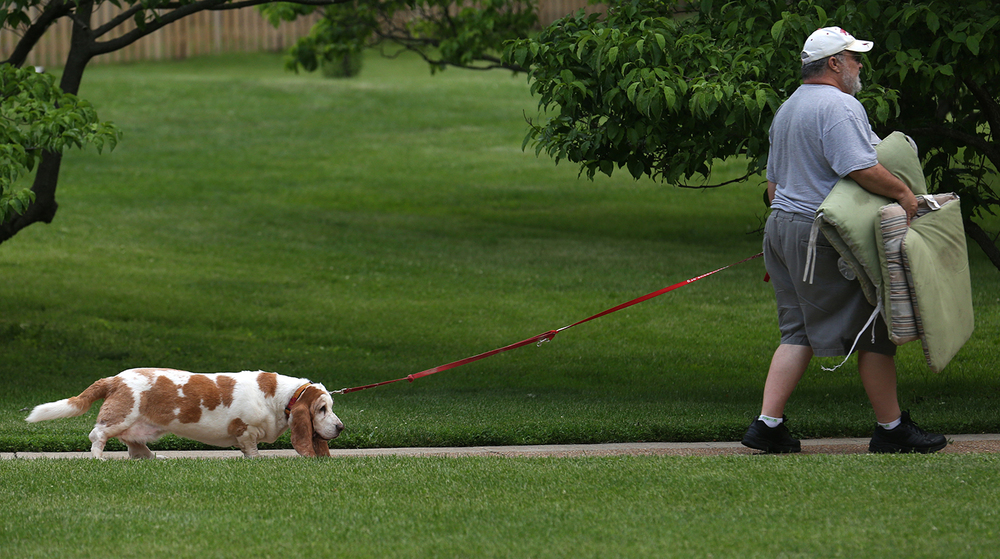 John Gulley and his Bassett Hound, Birdie, head for a good listening spot at the 53rd annual International Carillon Festival in Washington Park June 4, 2014. David Spencer /The State Journal-Register