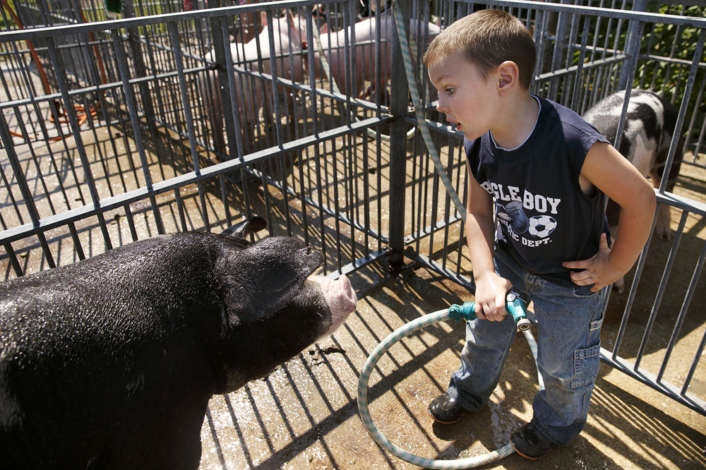 Five-year-old Owen White impatiently tells the spot gilt he's washing to turn around so he can finish washing him at the Morgan County Fair Wednesday, July 9, 2014. Ted Schurter/The State Journal-Register