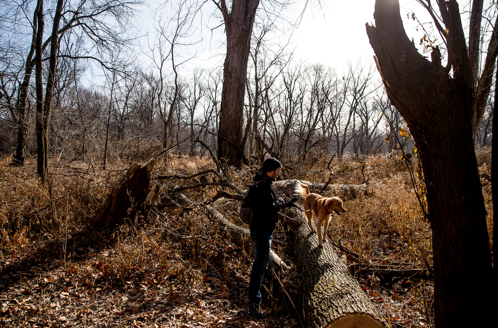 Alex Patia, of Los Angeles, Calif., lets his parent's dog, Gracie, climb around on a fallen tree while hiking with the group along the Sangamon River during the Sangamon Valley Group of the Sierra Club's Stone Soup Hike at Carpenter Park, Thursday, Jan. 1, 2015, in Springfield, Ill. Justin L. Fowler/The State Journal-Register