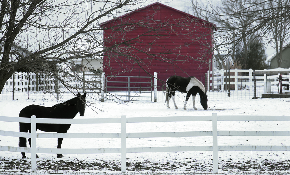 A red barn provides a backdrop to horses grazing in a snow-covered pasture on a small farm bordering the south side of Chatham Community Park near S. Main Street in Chatham late Wednesday afternoon, Jan. 14, 2015. David Spencer/The State Journal-Register