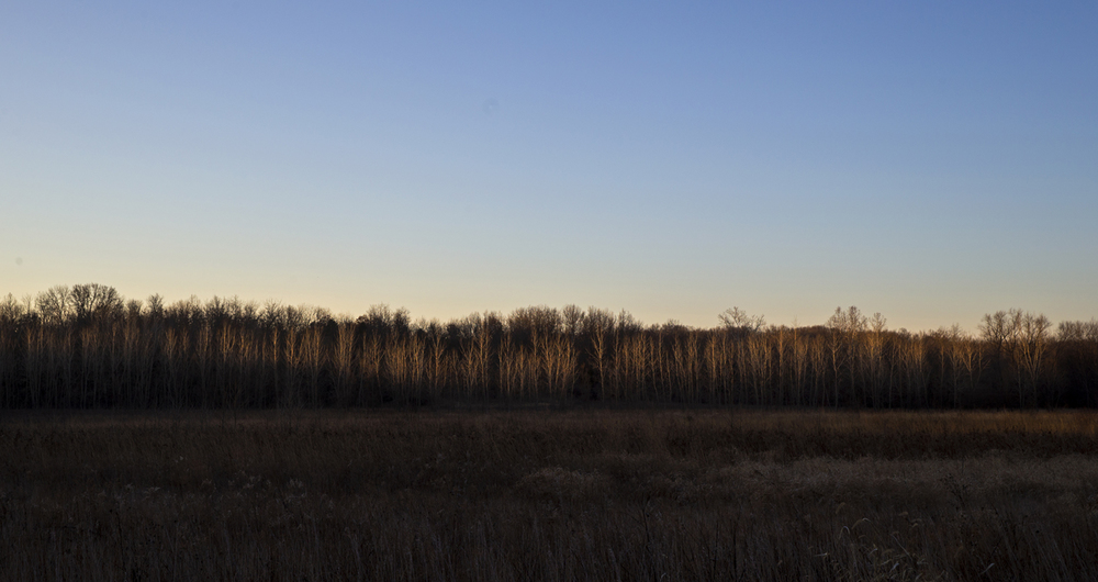 Early morning sunlight streaks across the bare trees along the Sangamon River west of Springfield Friday, Jan. 30, 2015. Ted Schurter/The State Journal-Register