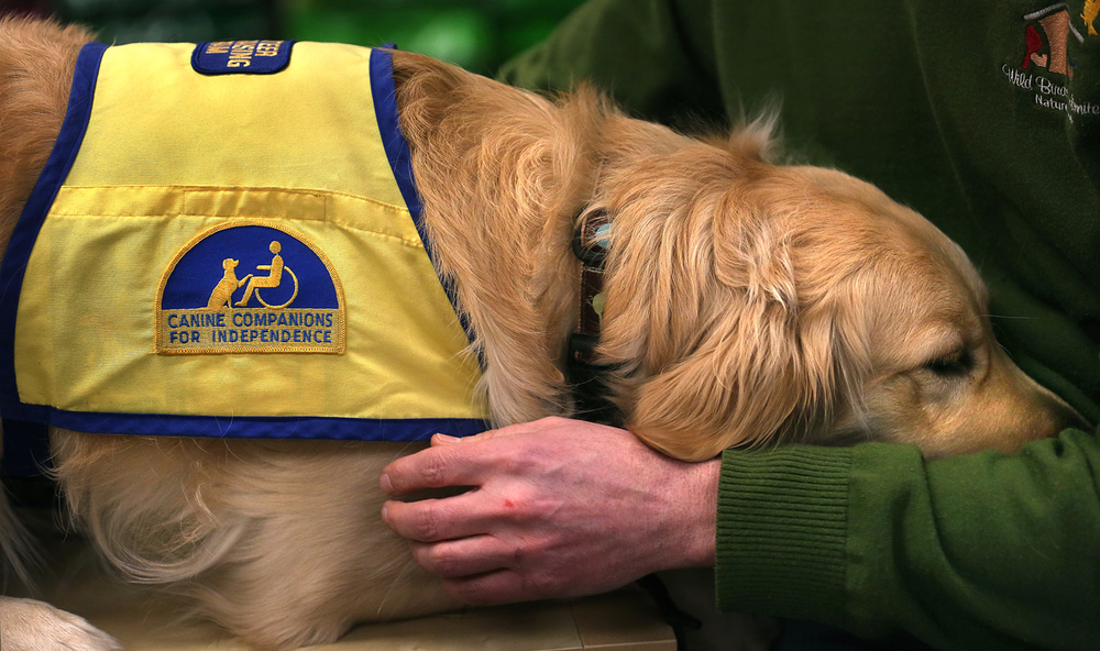 Patricia wears her Canine Companions for Independence training bib while seated next to Wade Kammin at Springfield's Wild Birds Unlimited on Wednesday, Feb. 11, 2015. David Spencer/The 