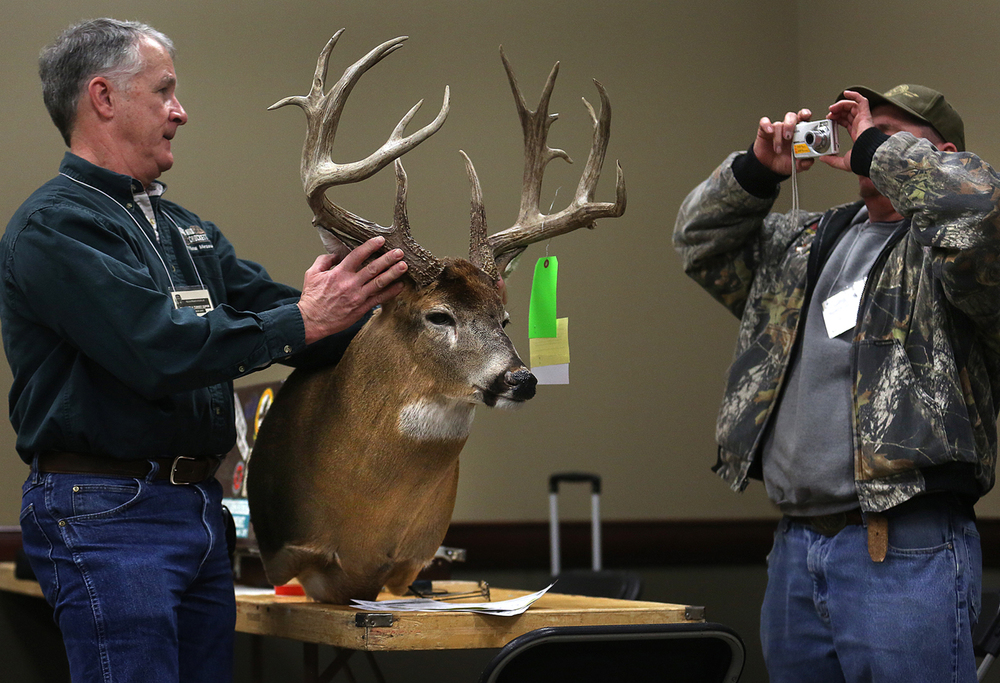 Expo deer measurer Dale Good, left, of Georgetown, Ill holds one of the more than 100 deer mounts that will be featured at this year's Expo for fellow measurer Ed Hendricks of Mt. Sterling who takes a picture of the deer mount by hunter Mark Stadel before it was put up for display. Good said this particular mount scored 15 points on the Boone & Crockett scoring standard. The 25th annual Field & Stream-Outdoor Life Illinois Deer & Turkey Expo opened for a three day run through Sunday at the Prairie Capital Convention Center in Springfield on Friday, Feb. 20, 2015. David Spencer/The State Journal-Register