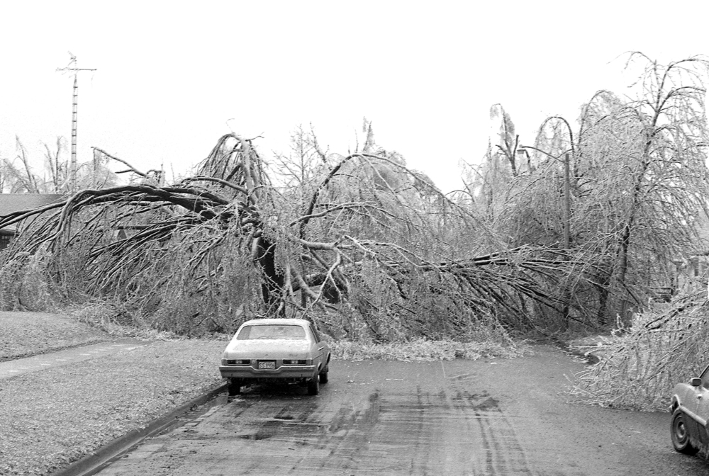 A downed tree in the 2300 block S. Eleventh Street, March 1978. File/The State Journal-Register