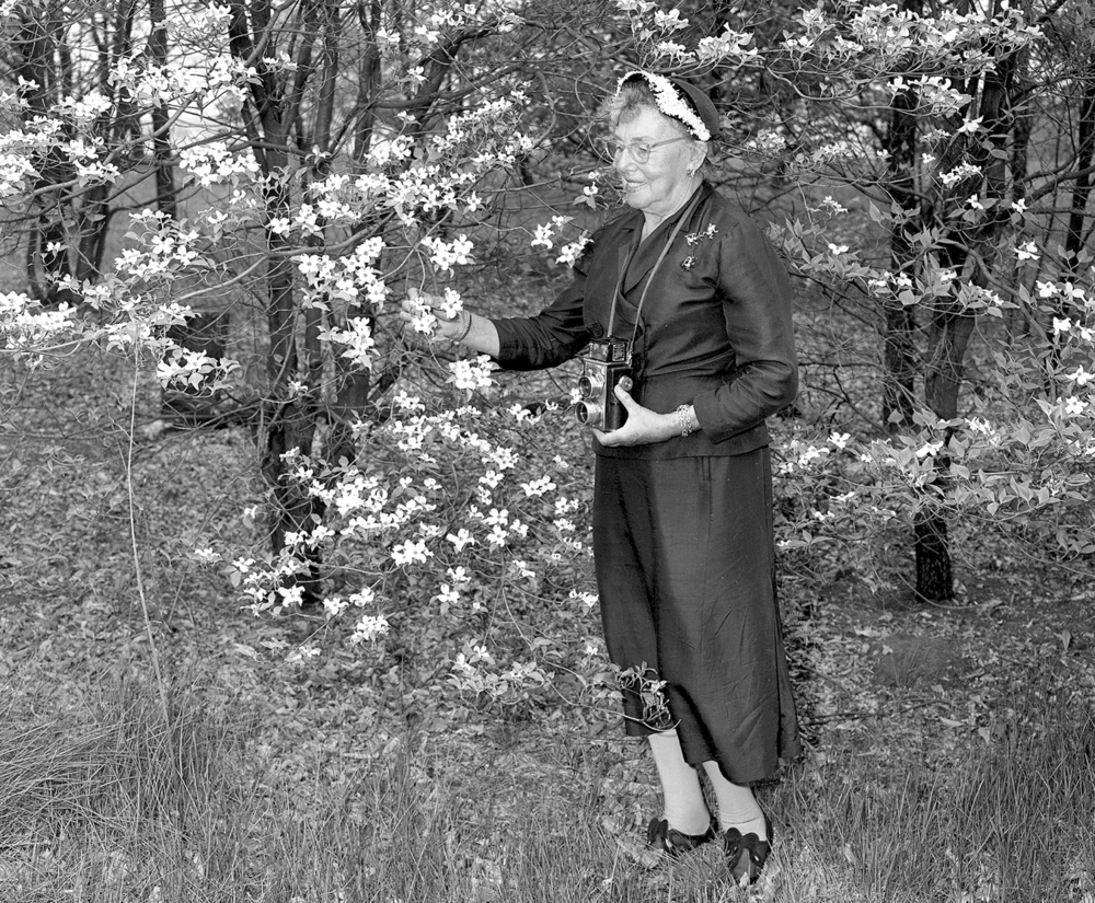 Woman with camera and flowering dogwood tree, Lincoln Garden?, April 30, 1954. 