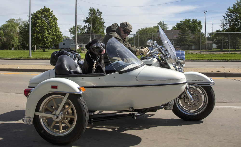 Equipped with his own goggles, a canine companion rides shotgun in a Harley Davidson side-car as his owner drives along East Clear Lake Avenue Monday, May 25, 2015. Ted Schurter/The State Journal-Register