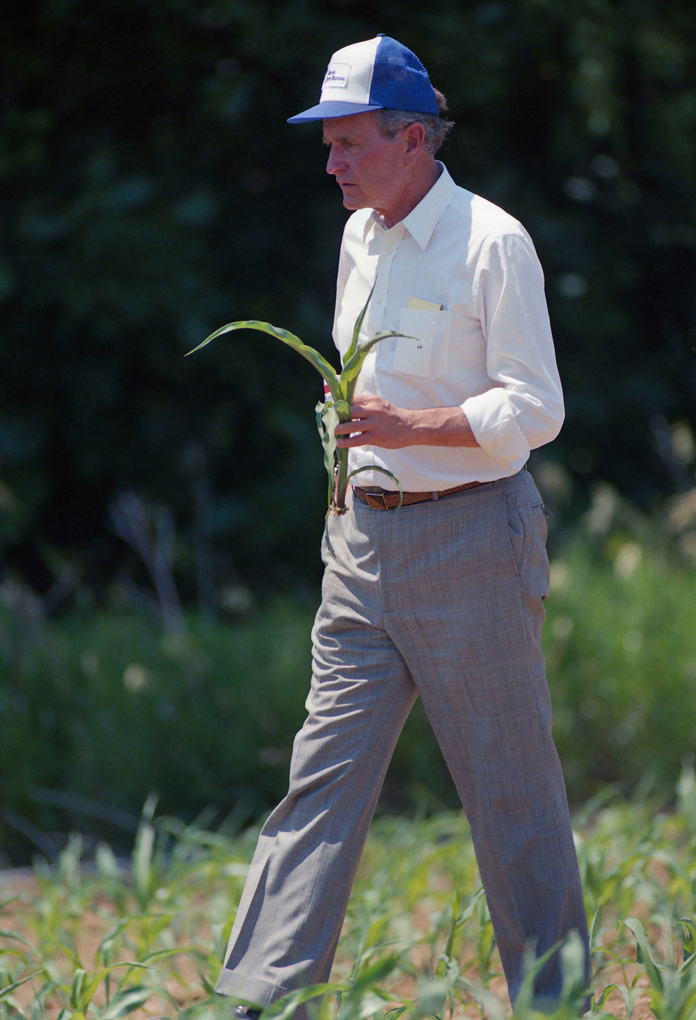 Vice President George H.W. Bush carries a stunted corn plant after a press conference June 18, 1988 in a field near Sherman. Bush was touring Raymond Poe's drought stricken corn field during a campaign stop in the area. File/The State Journal-Register