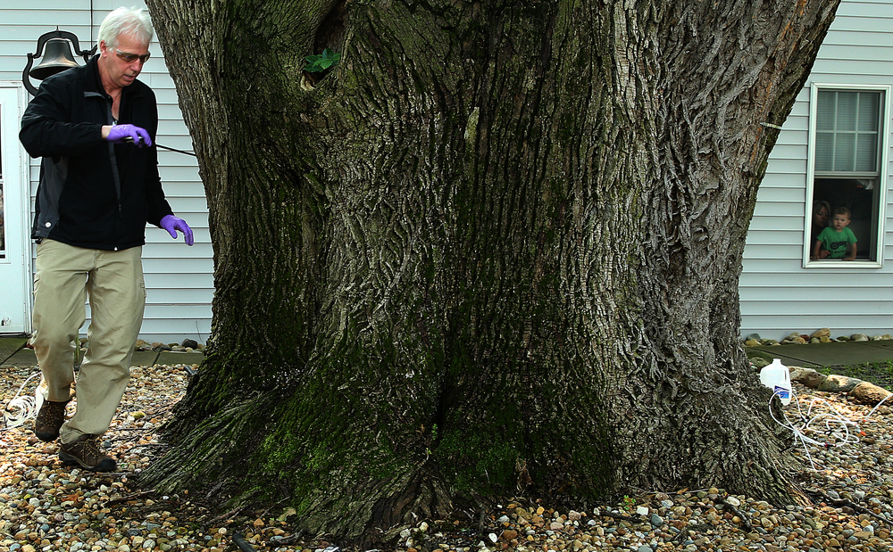 Jeff Palmer, an arborist who works for Arborjet, the manufacturer of the Ash Borer insecticide TREE-age, uses a tape measure to measure the girth of the Howry's tree Tuesday morning before the application of the insecticide.Looking on at right  inside the Howry home is Hudson Gilbert, 2, and grandmother Debby Howry. David Spencer/The State Journal-Register