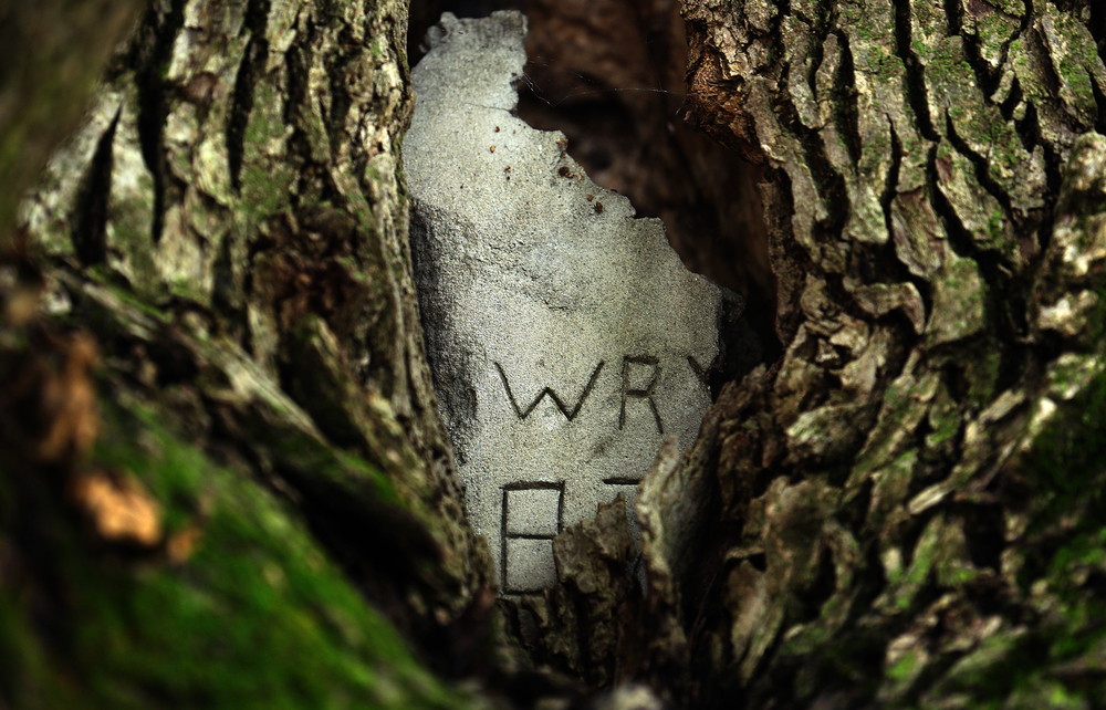When the Howry's first moved into their new home in 1980, they placed this concrete plug in a crevice where a limb once grew and added the initials of their children and last name in order to protect it a bit. The practice is now frowned on by certified arborists. David Spencer/The State Journal-Register