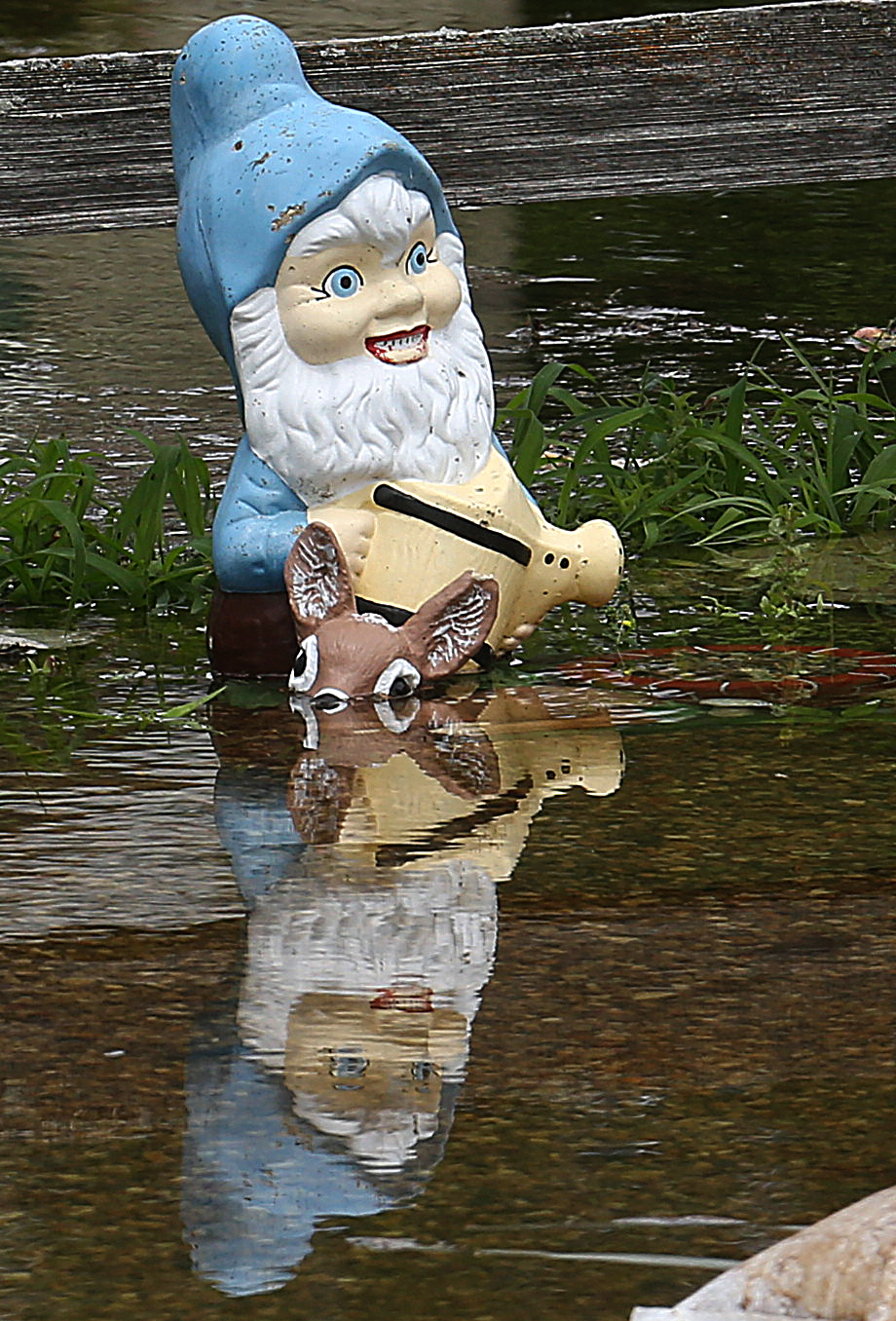 A partially submerged garden gnome holding a watering can seen in the front yard of a Gaskill St. home.David Spencer/The State Journal-Register