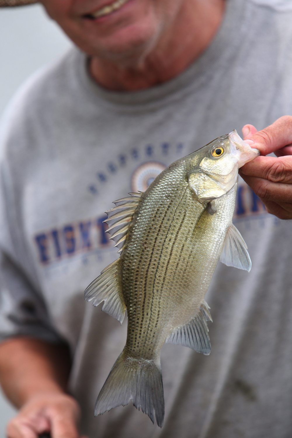 Jacksonville angler Steve Sherrill shows off a White Bass he caught while fishing from the flooded boat ramp of the Naples Boat Club north of downtown Thursday afternoon. David Spencer/The State Journal-Register