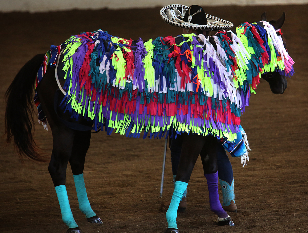 A Mexican theme was in evidence in a costume worn by a horse named Banner, while owner Breckon McKinney of Fulton county completed the outfit wearing a sombrero. David Spencer/The State Journal-Register