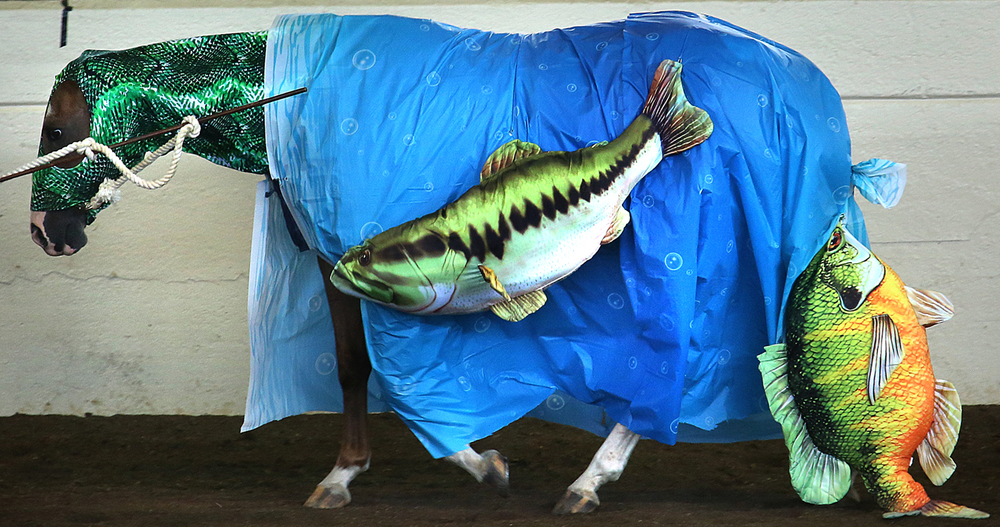 Lils Rillito Bar, owned by Chase Allen of Knox County, was dressed as a fish for  the 4-H Junior Horse Show Costume Class Thursday, July 23, 2015 in the coliseum at the Illinois State Fairgrounds. Nearly 400 riders from counties all over Illinois competed in a variety of events at this year's show. David Spencer/The State Journal-Register