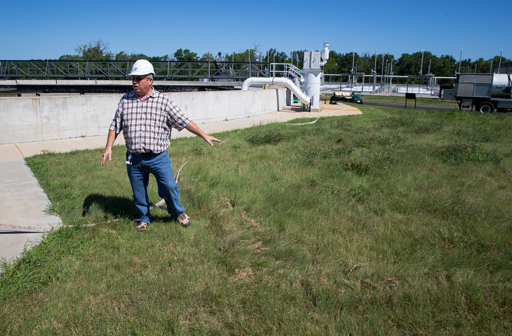 Gregg Humphrey, the executive director of the Springfield Metro Sanitary District, points out the buffalo grass that was planted that only grows to a certain height and allows for less mowing at the Springfield Metro Sanitary District's Spring Creek wastewater treatment plant, Friday, July 31, 2015, in Springfield, Ill. Justin L. Fowler/The State Journal-Register