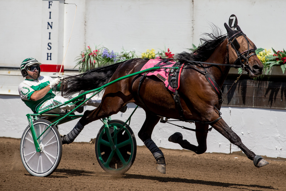 Pat Curtin drives Dr. Venkman to victory in the Illinois State Fair Colt Stakes 2 Year Old Colts & Geldings (Illinois Conceived & Foaled) during harness racing at the Illinois State Fairgrounds, Friday, Aug. 14, 2015, in Springfield, Ill. Justin L. Fowler/The State Journal-Register