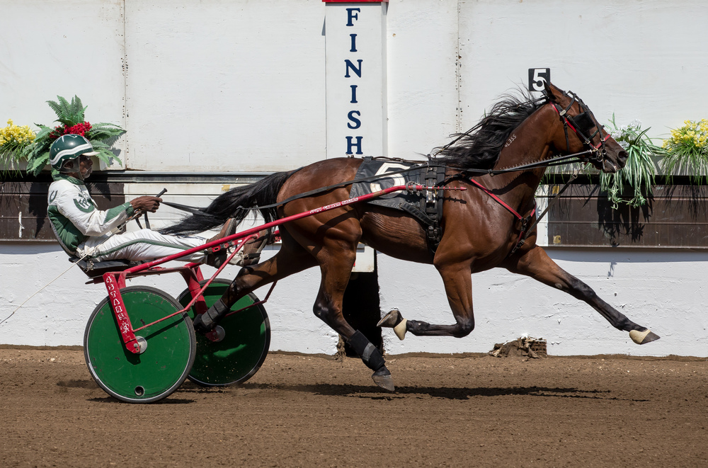 Freddie Patton Jr. drives Primed N Powerful to victory in the Illinois State Fair Colt Stakes 2 Year Old Colts & Geldings (Illinois Conceived & Foaled) during harness racing at the Illinois State Fairgrounds, Friday, Aug. 14, 2015, in Springfield, Ill. Justin L. Fowler/The State Journal-Register