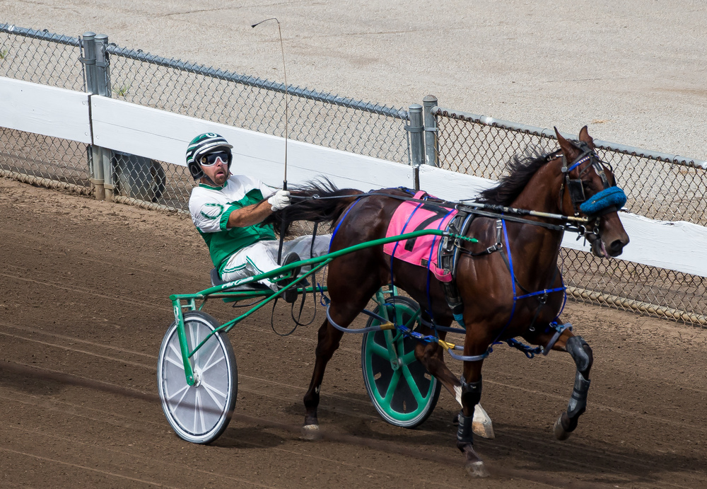 Pat Curtin drives Db to victory in the Illinois State Fair Colt Stakes 2 Year Old Colts & Geldings (Illinois Conceived & Foaled) during harness racing at the Illinois State Fairgrounds, Friday, Aug. 14, 2015, in Springfield, Ill. Justin L. Fowler/The State Journal-Register