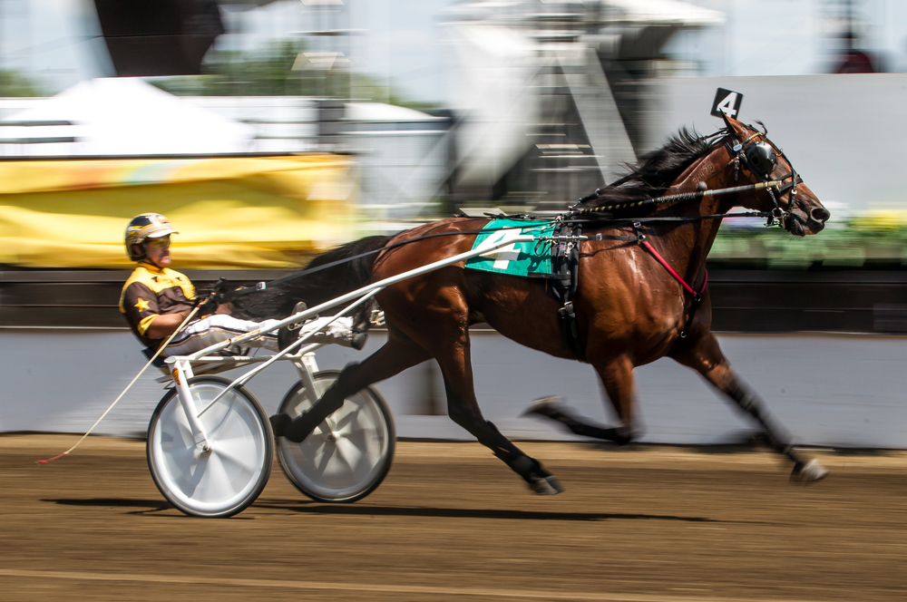 Michael Oosting drives King Mufasa to victory in the Illinois State Fair Stake Horses & Geldings (Illinois Conceived & Foaled) during harness racing at the Illinois State Fairgrounds, Saturday, Aug. 15, 2015, in Springfield, Ill. Justin L. Fowler/The State Journal-Register