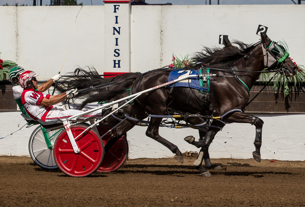 Driver Todd Warren narrowly takes the victory with Earndawg over Pat Curtin and Dinky Dune in the Illinois State Fair Colt Stakes 3 Year Old Colts & Geldings (Illinois Conceived & Foaled) during harness racing at the Illinois State Fairgrounds, Saturday, Aug. 15, 2015, in Springfield, Ill. Justin L. Fowler/The State Journal-Register
