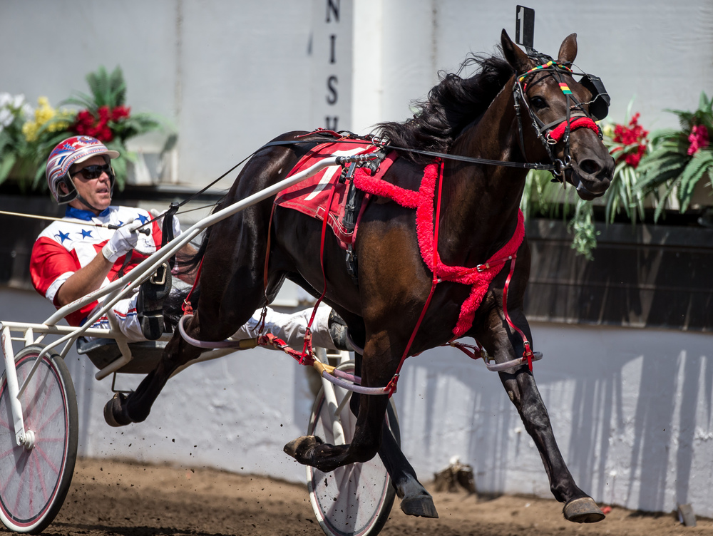 Driver Casey Leonard takes the victory with Fox Valley Bailey in the Illinois Department of Agriculture 2 Year Old Fillies (Illinois Conceived & Foaled) during harness racing at the Illinois State Fairgrounds, Saturday, Aug. 15, 2015, in Springfield, Ill. Justin L. Fowler/The State Journal-Register