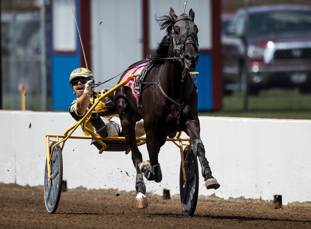 Driver Robert Smolin reacts as he takes the lead with Tricky Nick in the Illinois State Fair Colt Stakes 3 Year Old Colts & Geldings (Illinois Conceived & Foaled) during harness racing at the Illinois State Fairgrounds, Saturday, Aug. 15, 2015, in Springfield, Ill. Justin L. Fowler/The State Journal-Register